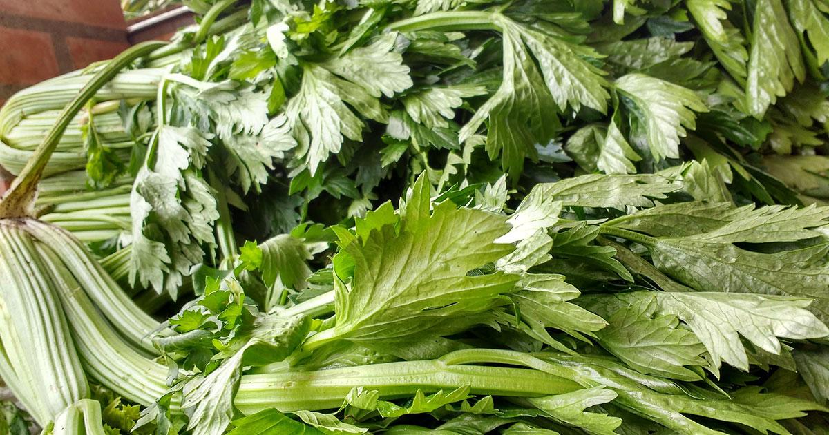 Is Celery Keto?