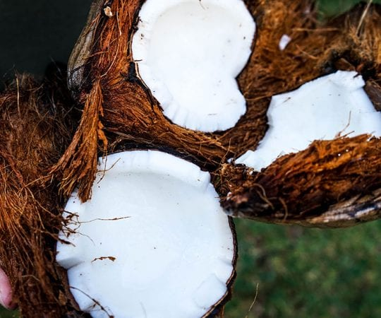 Is Coconut Milk Keto?