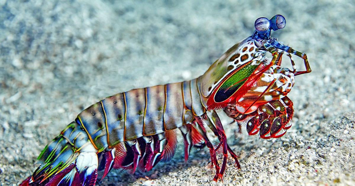Is Shrimp Keto?