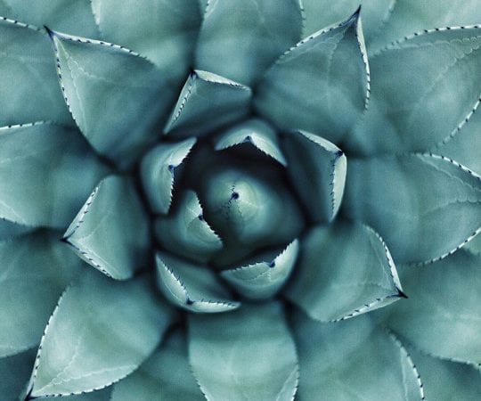 Is Agave Keto?